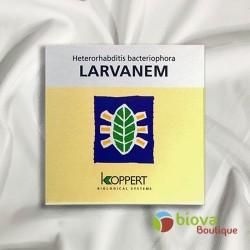 LARVANEM 500 Millions (Heterorabditis Bacteriophora)