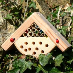Mini Gite à Insectes